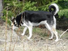 Felix Hund Dakota