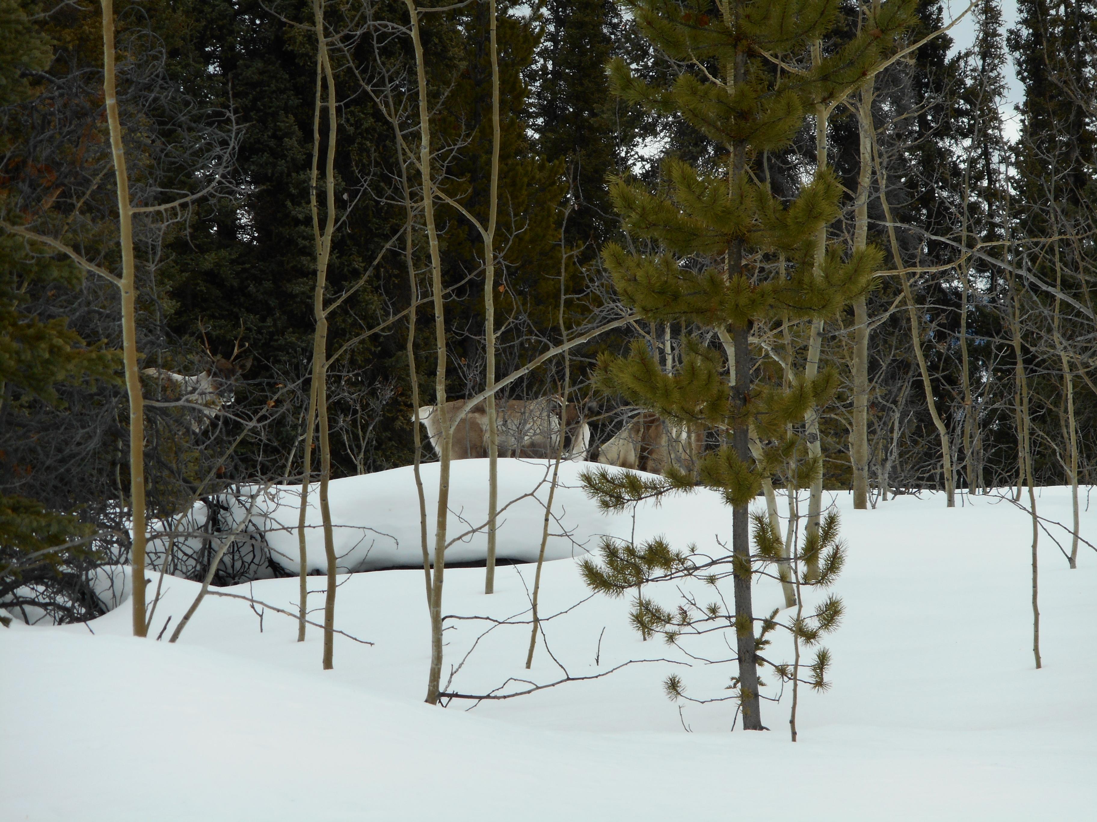 Reiseblog - Weite Ferne, Kanada
